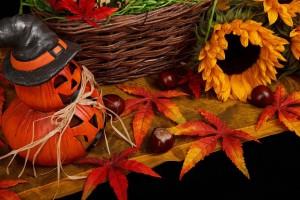 free-photo-autumn-21496